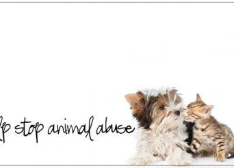 ways to help stop animal abuse