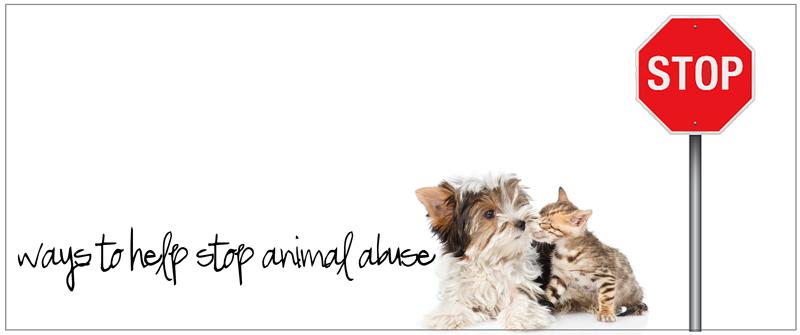ways to help stop animal abuse
