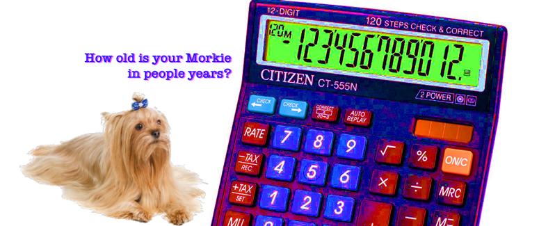 Morkie years to human years?