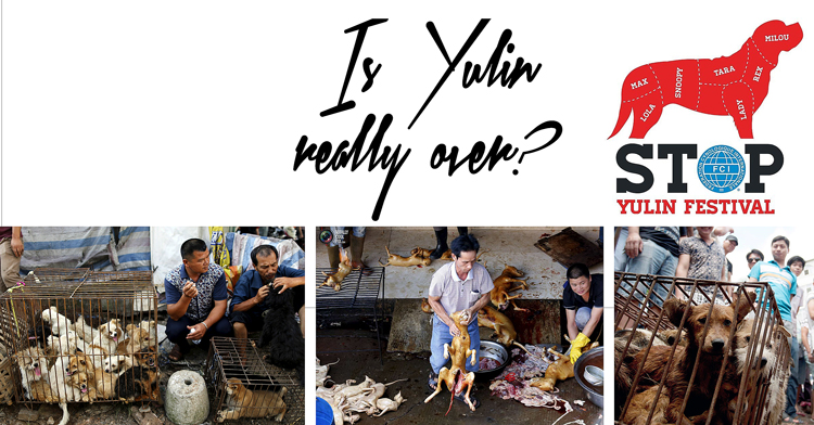 Yulin Dog Meat Festival – cancelled this year!