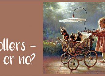 Dogs in Stroller