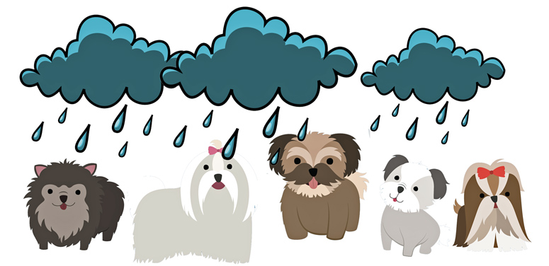 heavy rainstorm and dogs under the downpour