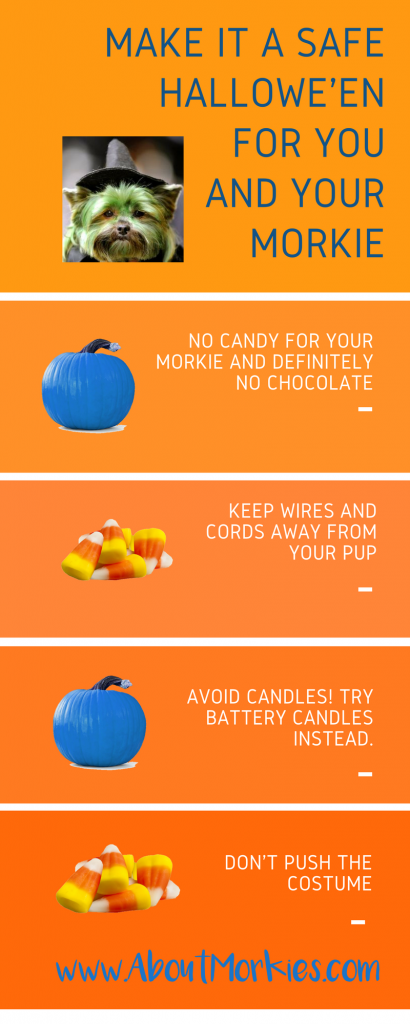 Safety reminders halloween dogs