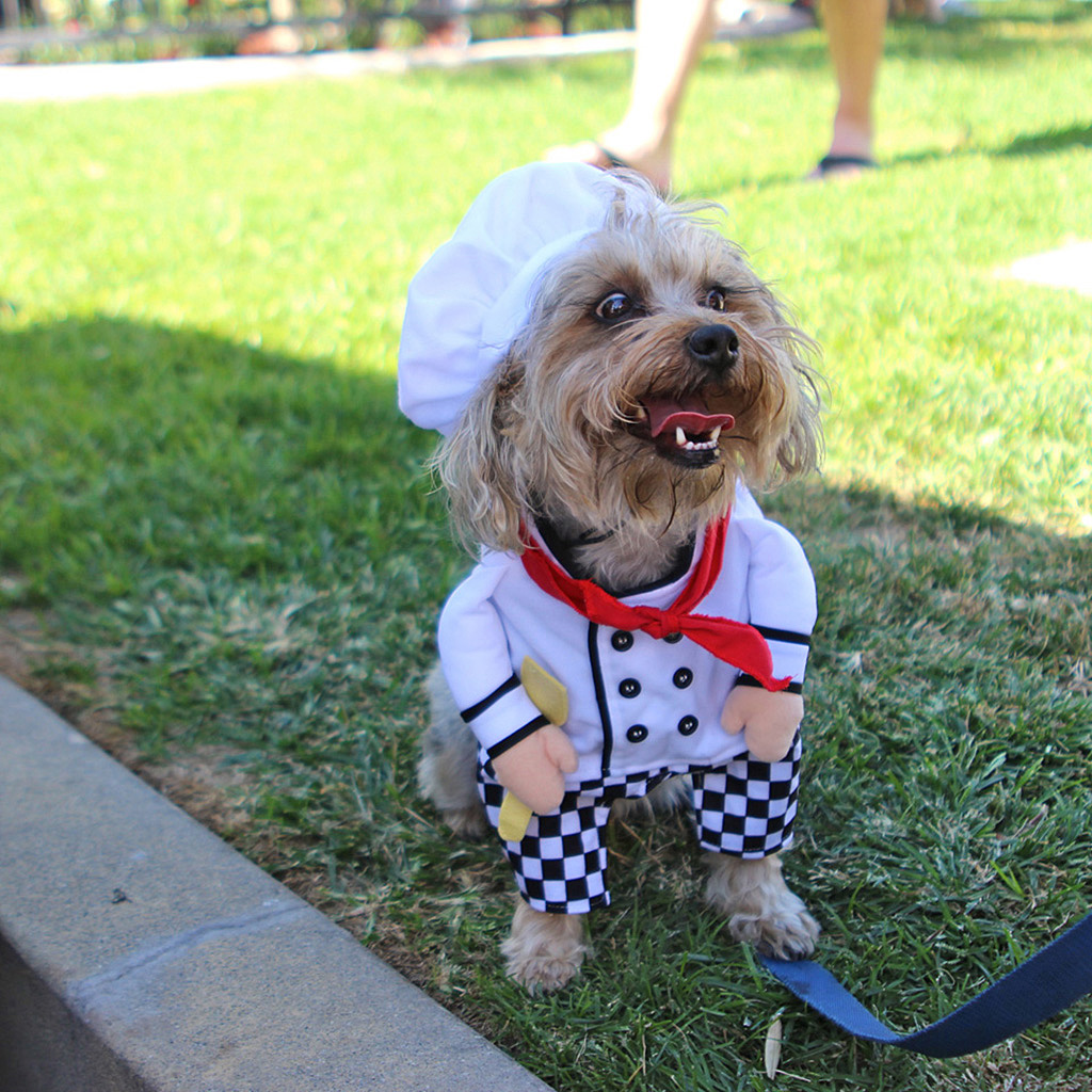 dog costume contest