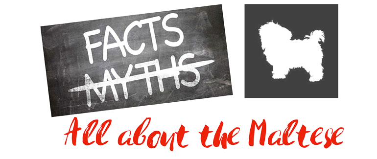all about the maltese facts versus myth