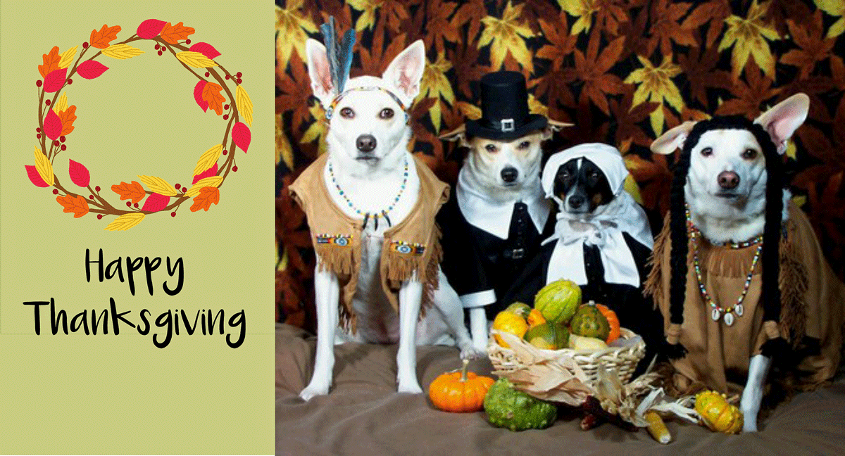 happy thanksgiving dogs dressed as pilgrims