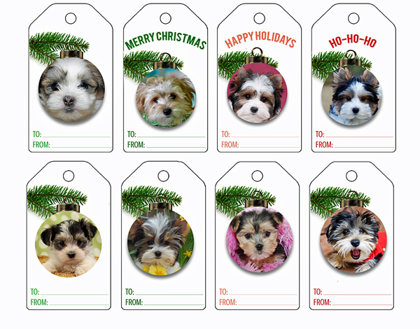 Printable Morkie gift tags