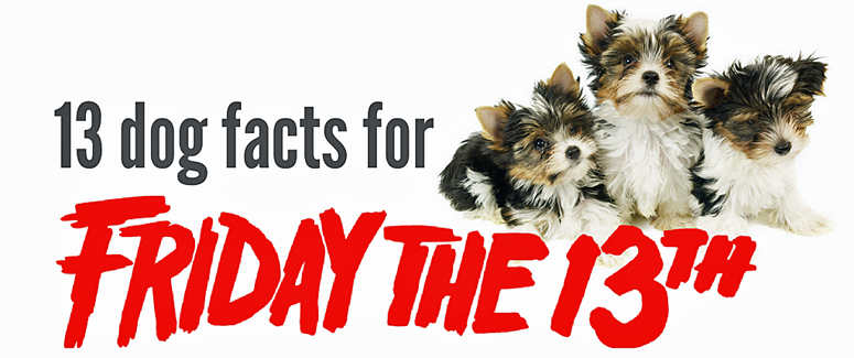 13 Dog Facts You Probably Don't Know