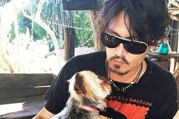 Johnny Depp and Yorkie