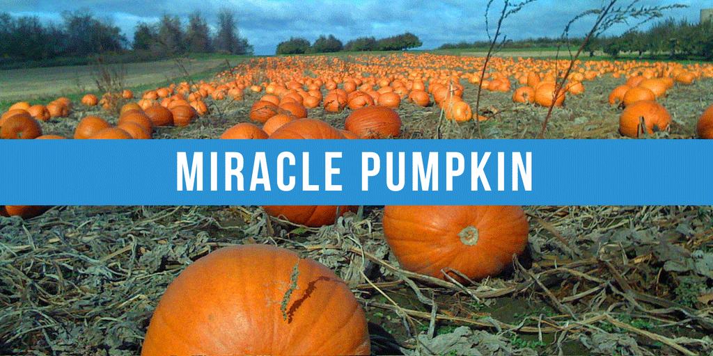 Miracle Pumpkin!