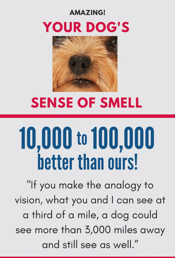 your dogs amazing sense of smell