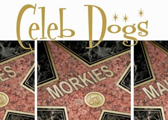 celebrity dogs in hollywood