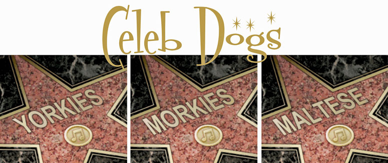 Celebrity Morkies, Yorkies & Maltese