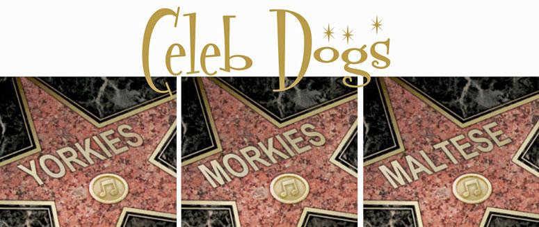 Celebrity Morkies, Yorkies & Maltese