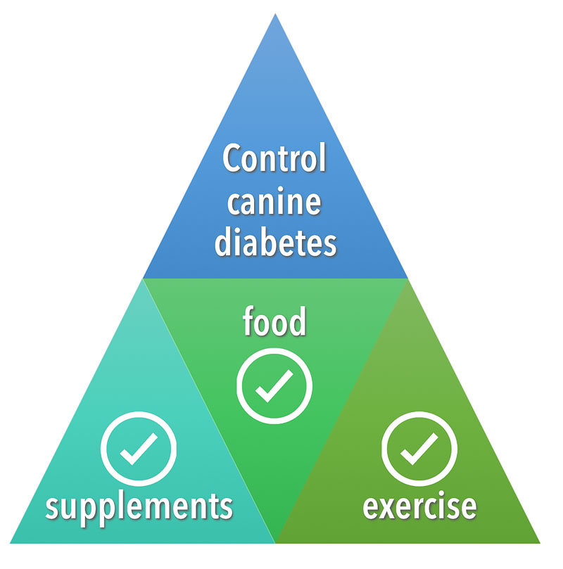 control canine diabetes