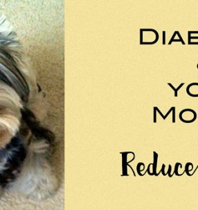 diabetes and your morkie