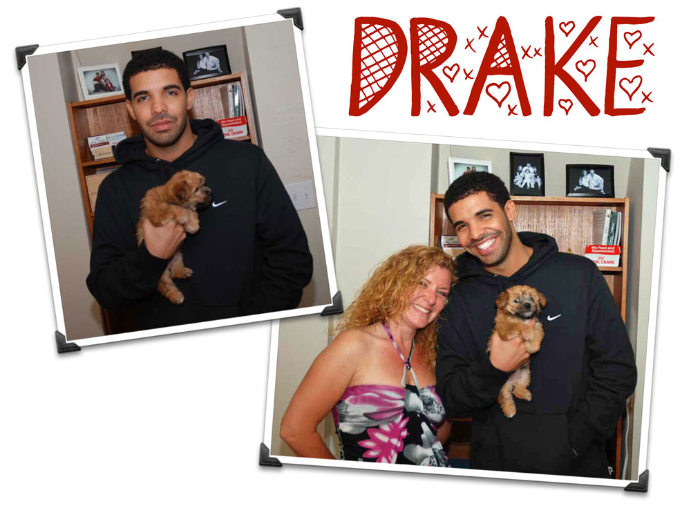 drake and his new morkie puppy