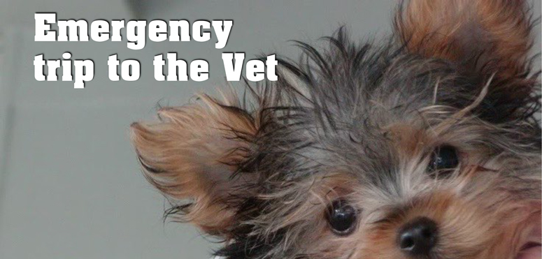 Common dog emergencies