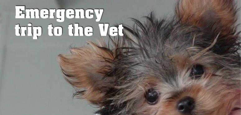 emergency trip to the vet