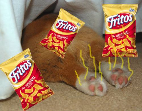 Dogs feet can smell like the popular corn chip, Fritos. Picture shows puppy paws and bag of Fritos.