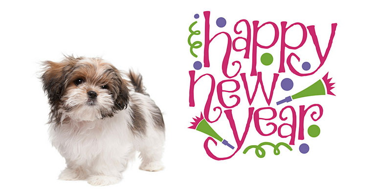 happy new year from the morkie