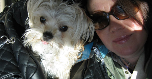 Jann Arden and her morkie midi