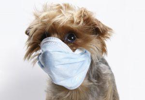 small sick dog