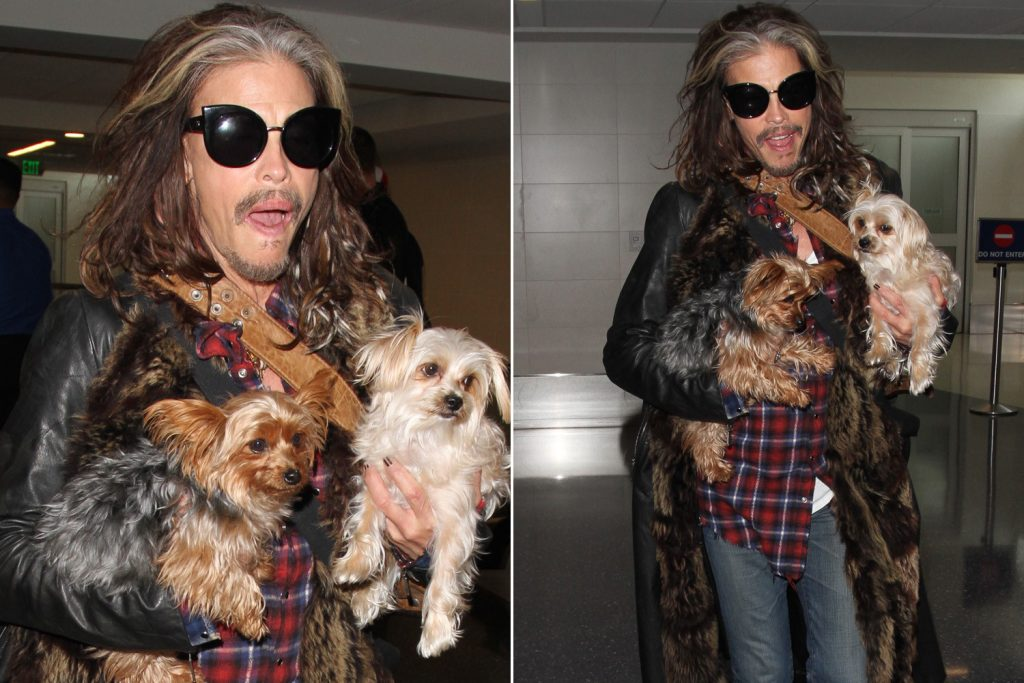 Steven Tyler and a yorkie and a morkie