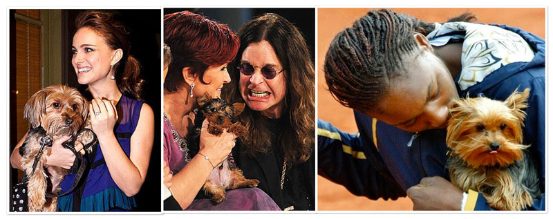 yorkie celebs ozzie osbourne and his wife
