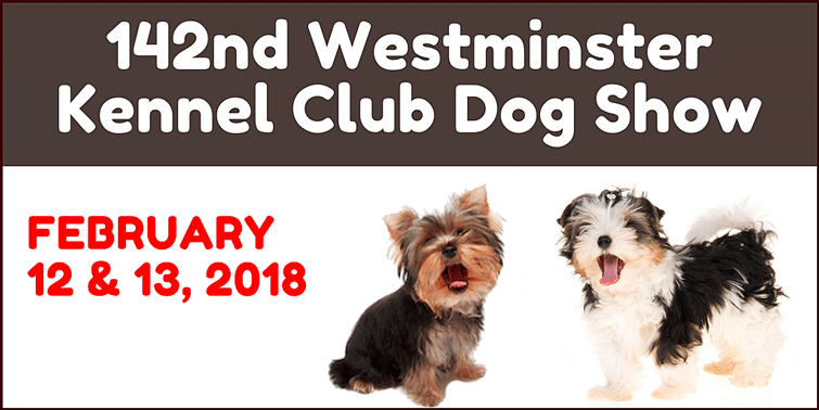 Westminister Kennel Club Dog Show