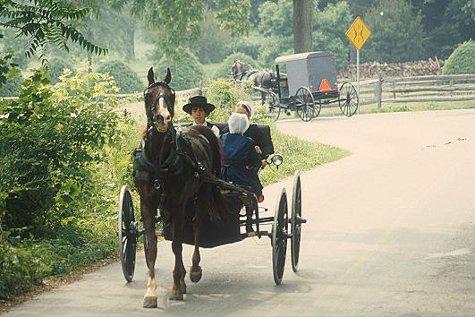 Amish are big operators of puppy mills