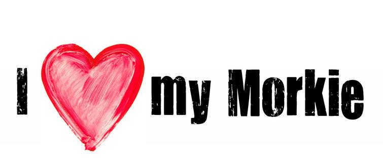 I heart my morkie