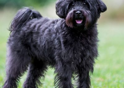 #7 – Schnoodle