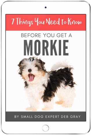 book about the maltese yorkie mix