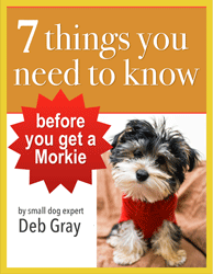 ebook about morky dog morkies information