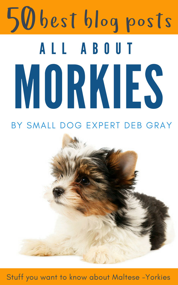 Dog care about morkies - book