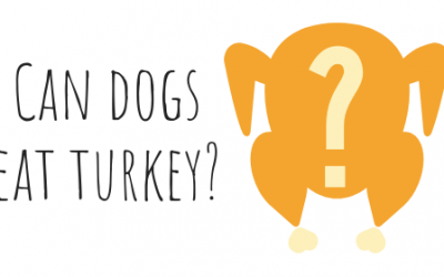 Can dogs eat turkey?