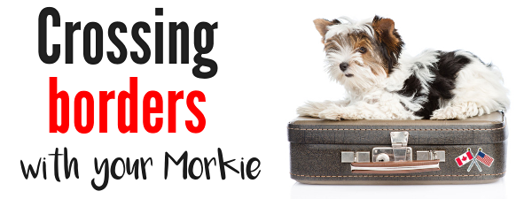 crossing borders with your pets