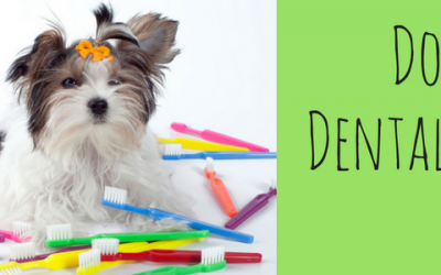 Dog Dental Care & Your Morkie