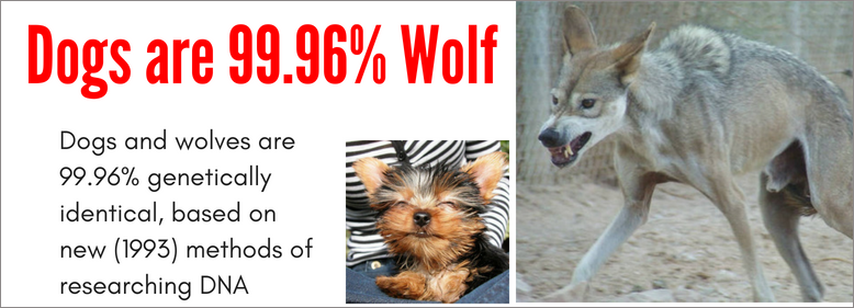 dogs are 99.96% wolf