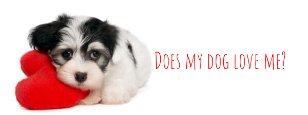 Does Your Morkie Love You?