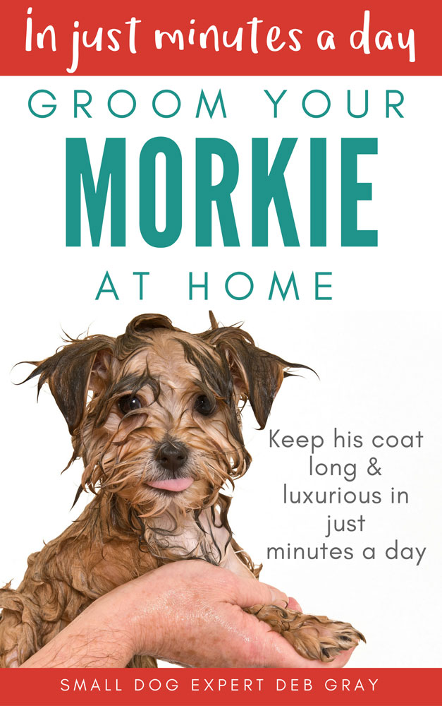 GROOM YOUR Morkie ebook cover