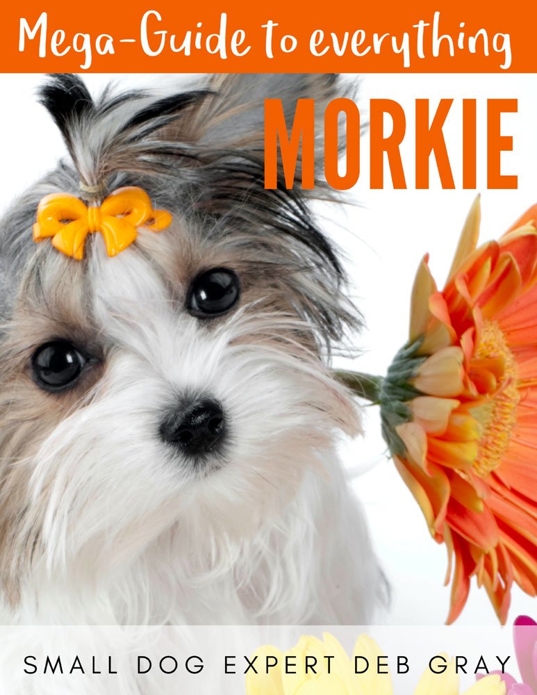 book about morkies - morkie mega-guide dog care