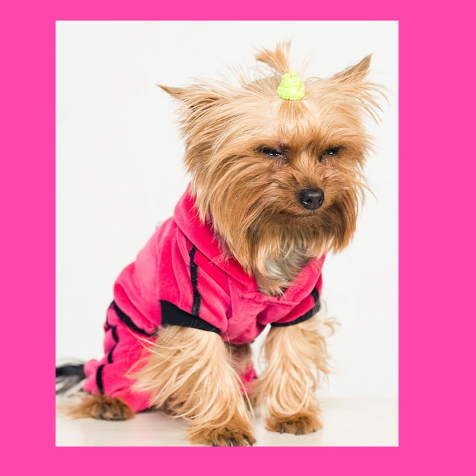 Yorkshire Terrier Shih Tzu Dachshund Ready to ship. Maltese Hand knit Dog sweater UNIQUE Luxurious Posh S size Dogs less than 10 lbs