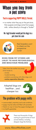 Why you shouldn't buy a puppy from a pet store