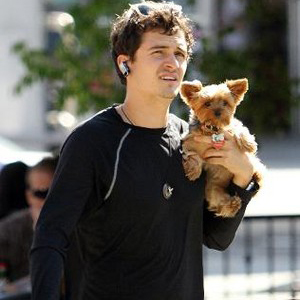 Orlando Bloom and his  yorkie