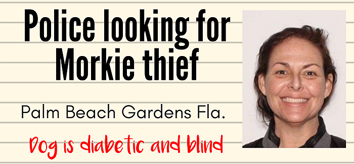 dog thief in florida took sick, blind Morkie
