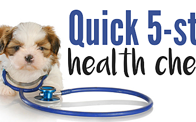 5 Easy Ways to Check Your Morkie's Health