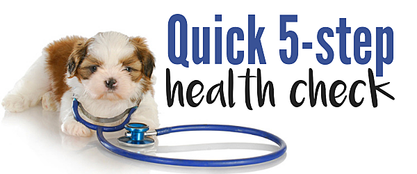 Quick health check for your dog