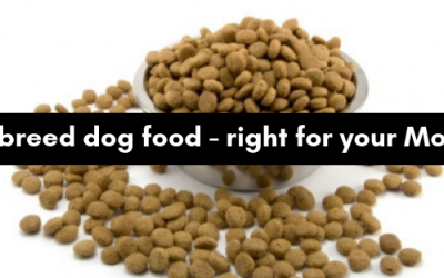 Small breed dog food – does your Morkie need it?